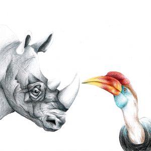 Rhino & Toucan